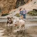 Preboda con perros de agua en cabo de gata